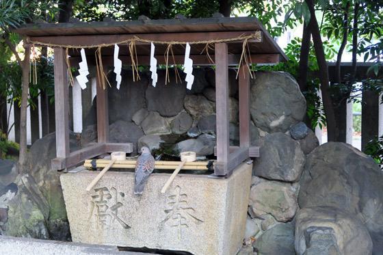 熊野神社の動物