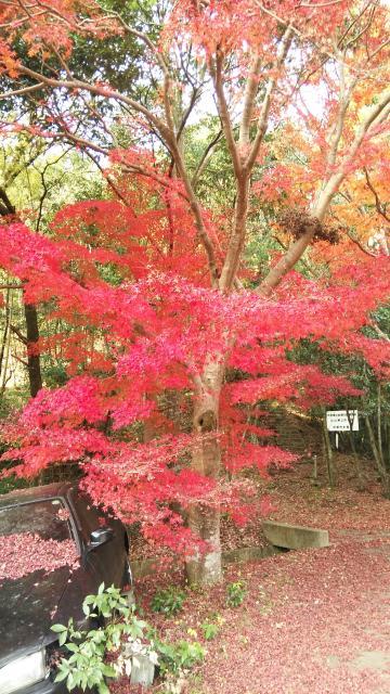 讃州寺の庭園