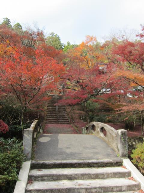 大洞院の庭園