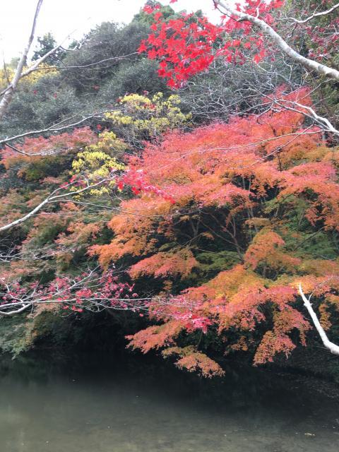 小松寺の自然