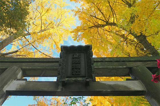 鳥越神社の鳥居