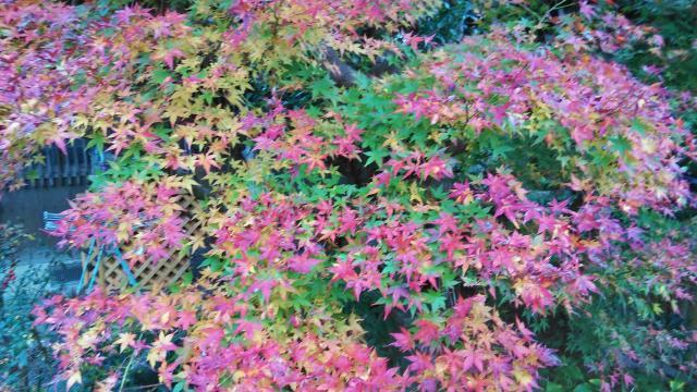 赤山禅院の庭園