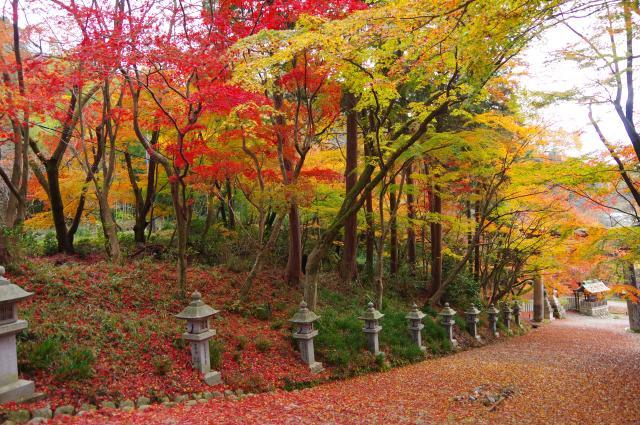 正覚寺の近くの神社お寺|胡宮神社
