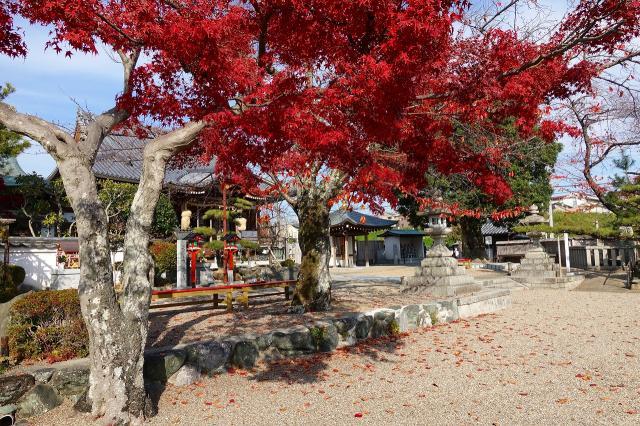 帝釈寺の庭園
