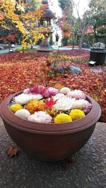 勝林寺の庭園