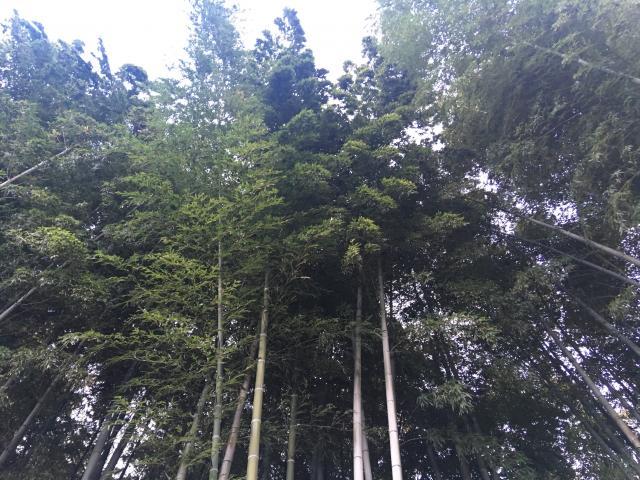 不知森神社の自然