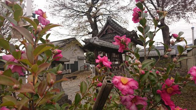 大手神社の自然
