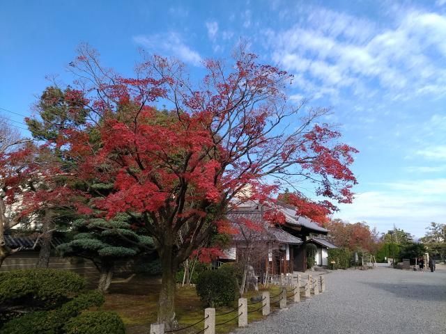 妙法院の庭園