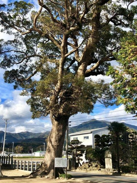 江島神社の自然